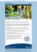 Commercial knotweed